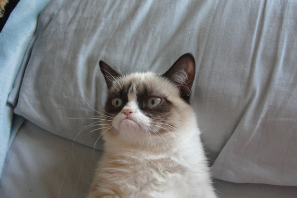 """Photo of Tardar Sauce, the cat which originated the """"Grumpy Cat"""" meme in September 2012."""